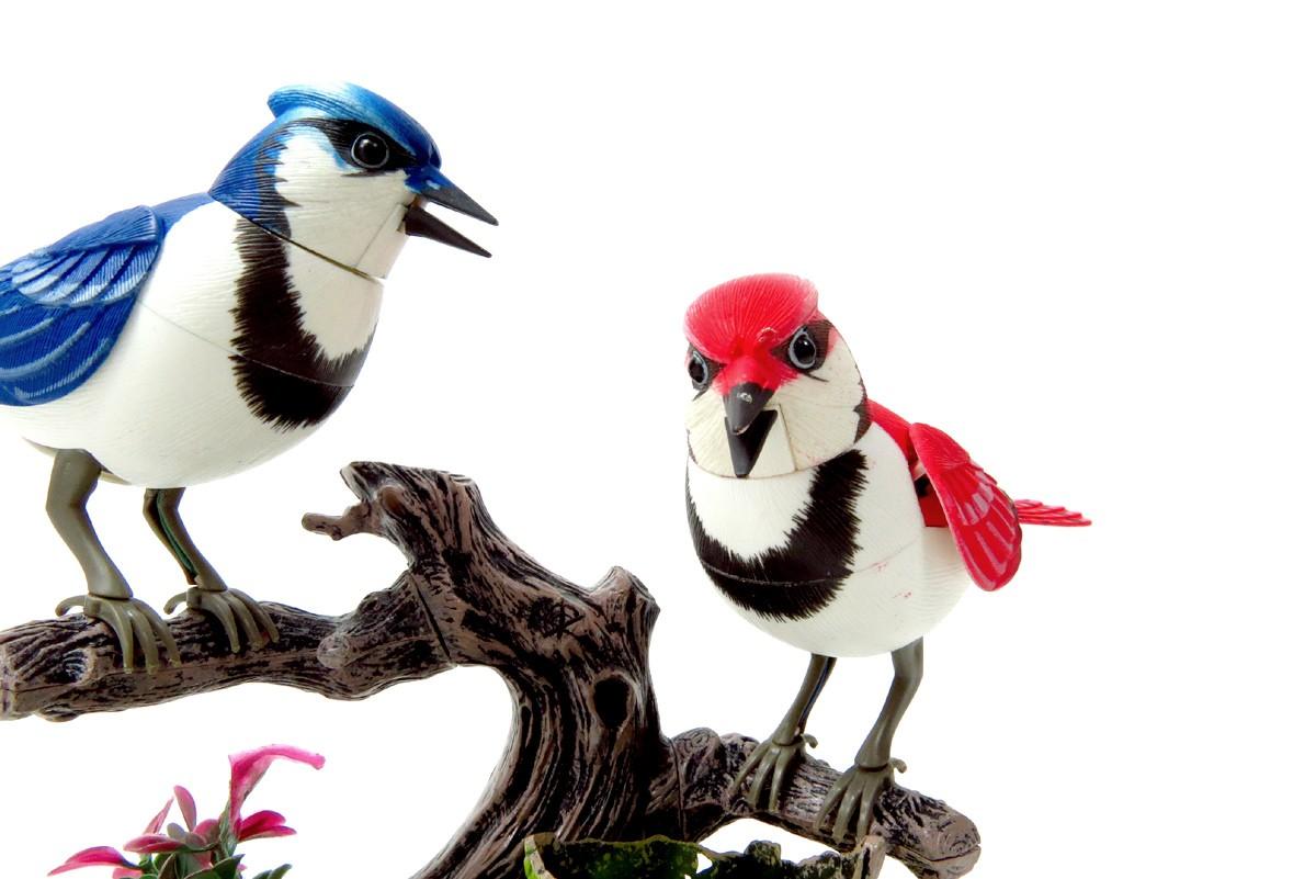 Free Birds Chirping Sound Effect