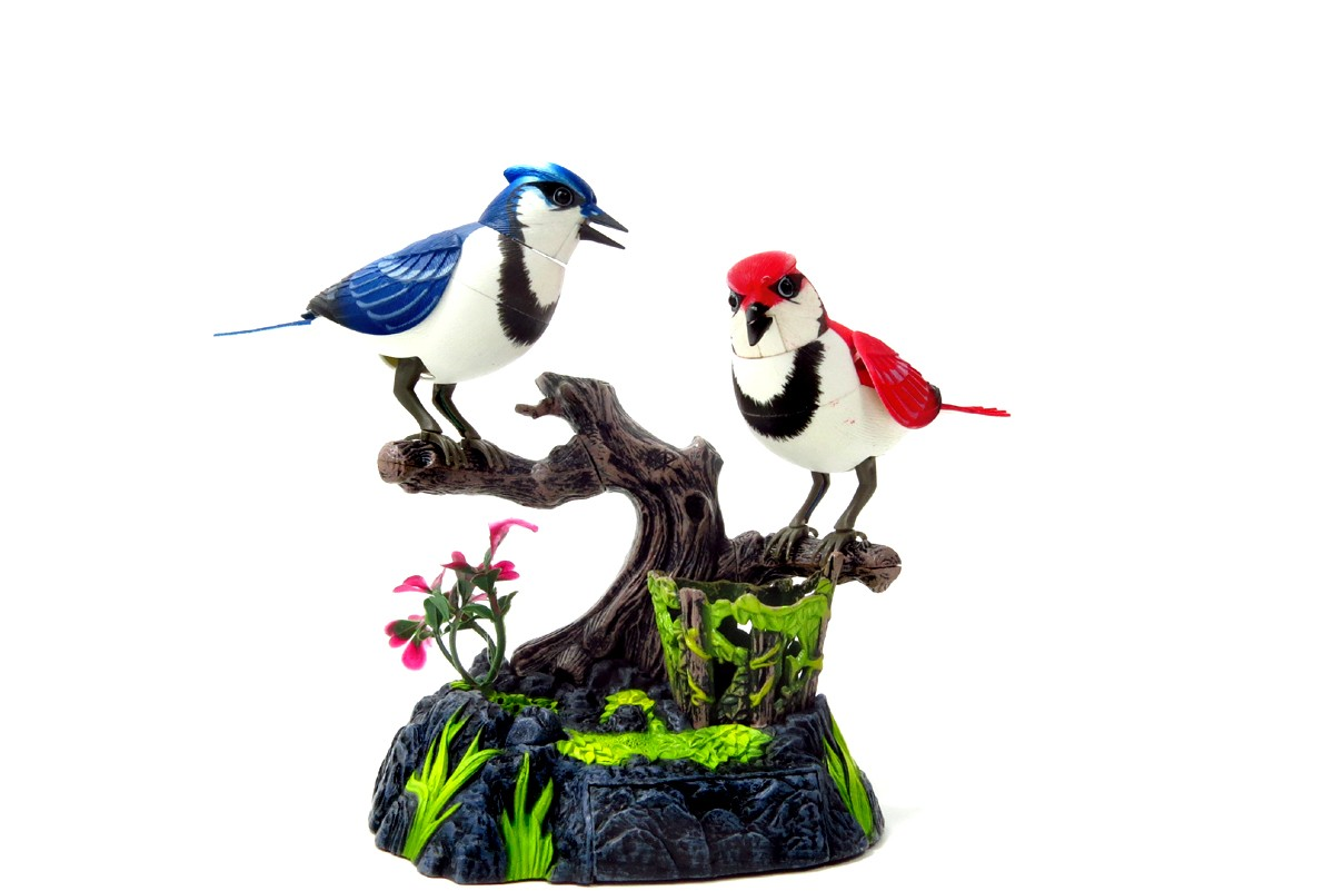 Singing & Chirping Birds - Realistic Sounds & Movements (Blue Jays) BC513AB