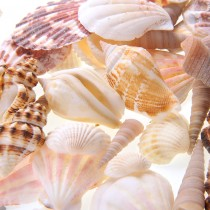 Mixed Beach Sea Shells For Decoration (Bag Of 50 Shells)